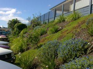 Brisbane commercial landscaping