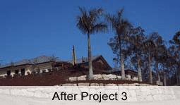 ex ground trees planted
