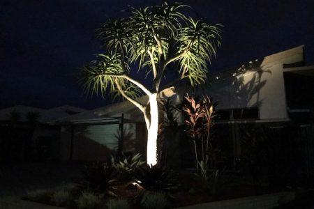 Garden spot light on Aloe Tree